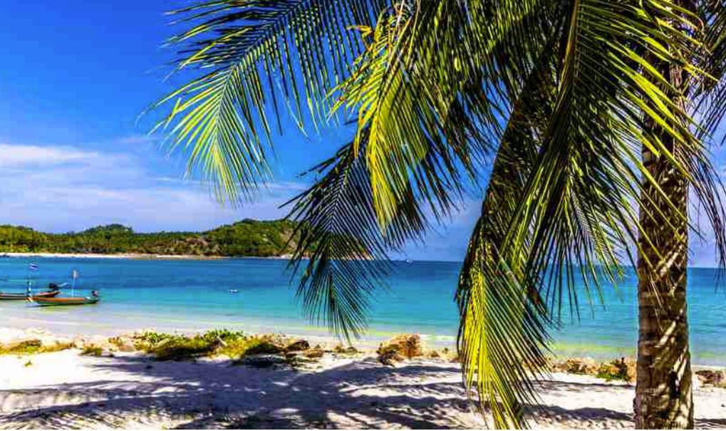 Hawaiian dancing, aldult program, beach scene, palm trees